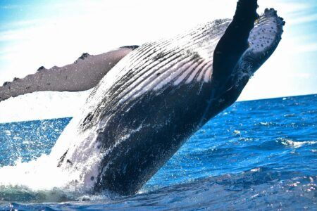 Behavior Analytics Firm: Crypto Whales Driving $REN's Price to All-Time Highs